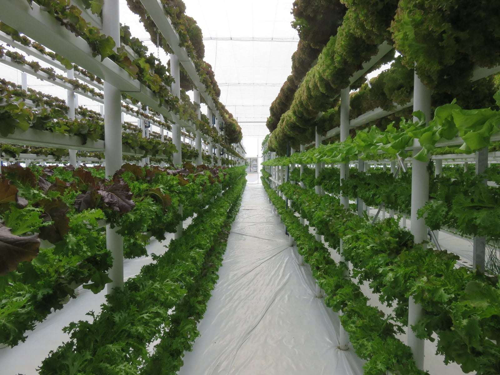 Hidroponiese blaarslaaiprojek, Greendrop Farms, Joostenberg