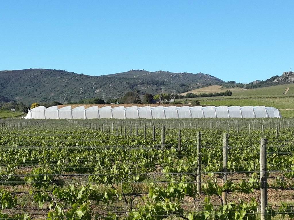 Greenhouse project, Lankgelê, Wellington