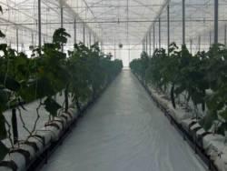 Greenhouse project Lebombo Wellington - 1