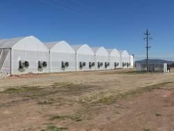 Hydroponic Lettuce Project, Greendrop Farms - 1